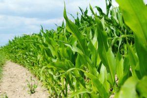 Crops - Field to Market Program