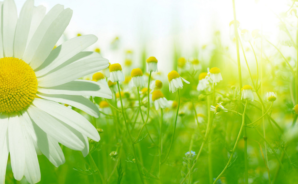 Keeping the Environment in Mind During Your Spring Cleaning